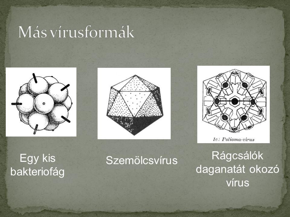 Rágcsálók daganatát okozó vírus