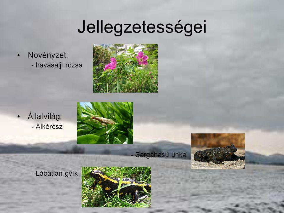 Jellegzetességei Növényzet: Állatvilág: - havasalji rózsa - Álkérész