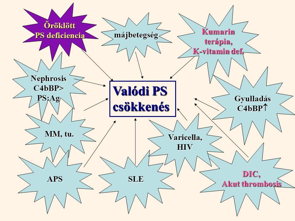 Valódi PS csökkenés SLE MM, tu. Kumarin terápia, K-vitamin def.