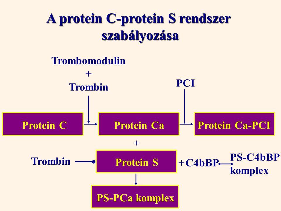 A protein C-protein S rendszer
