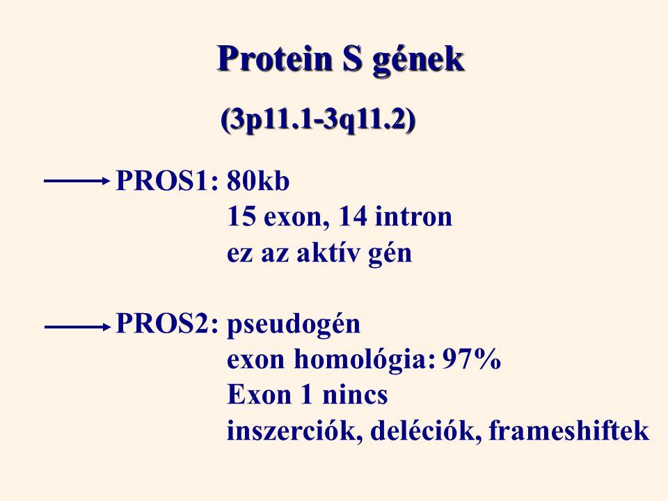 Protein S gének (3p11.1-3q11.2) PROS1: 80kb 15 exon, 14 intron