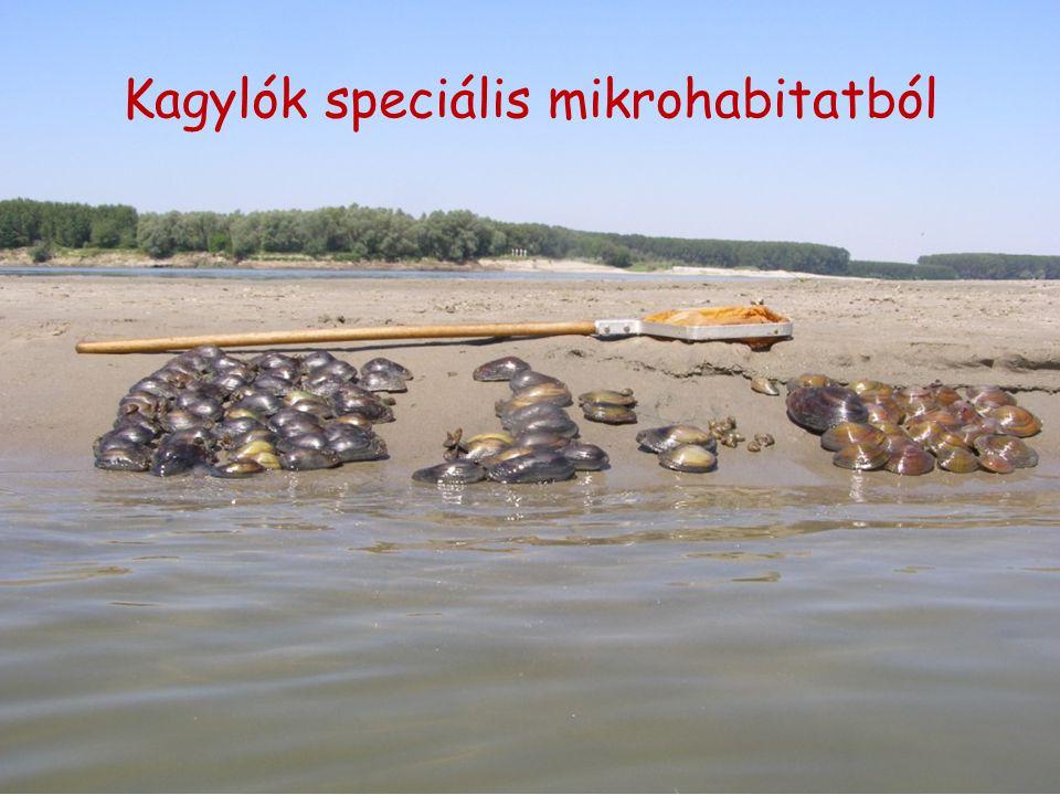 Kagylók speciális mikrohabitatból