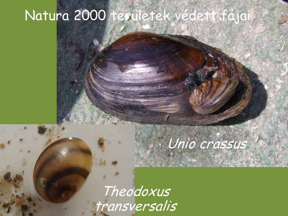 Natura 2000 területek védett fajai