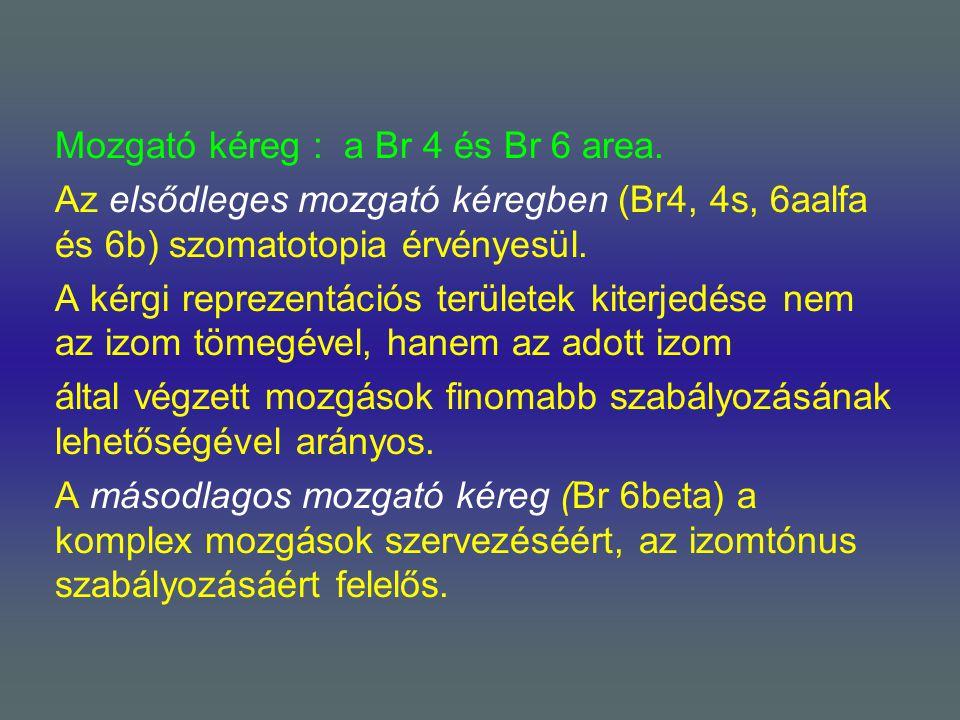 Mozgató kéreg : a Br 4 és Br 6 area