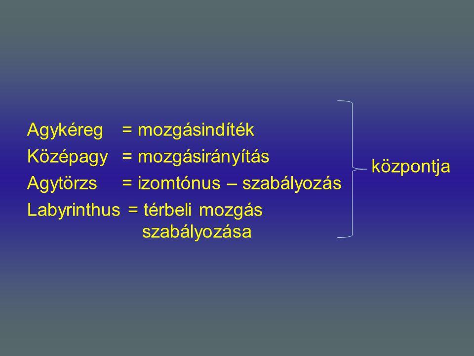 Agykéreg = mozgásindíték Középagy = mozgásirányítás Agytörzs = izomtónus – szabályozás Labyrinthus = térbeli mozgás szabályozása
