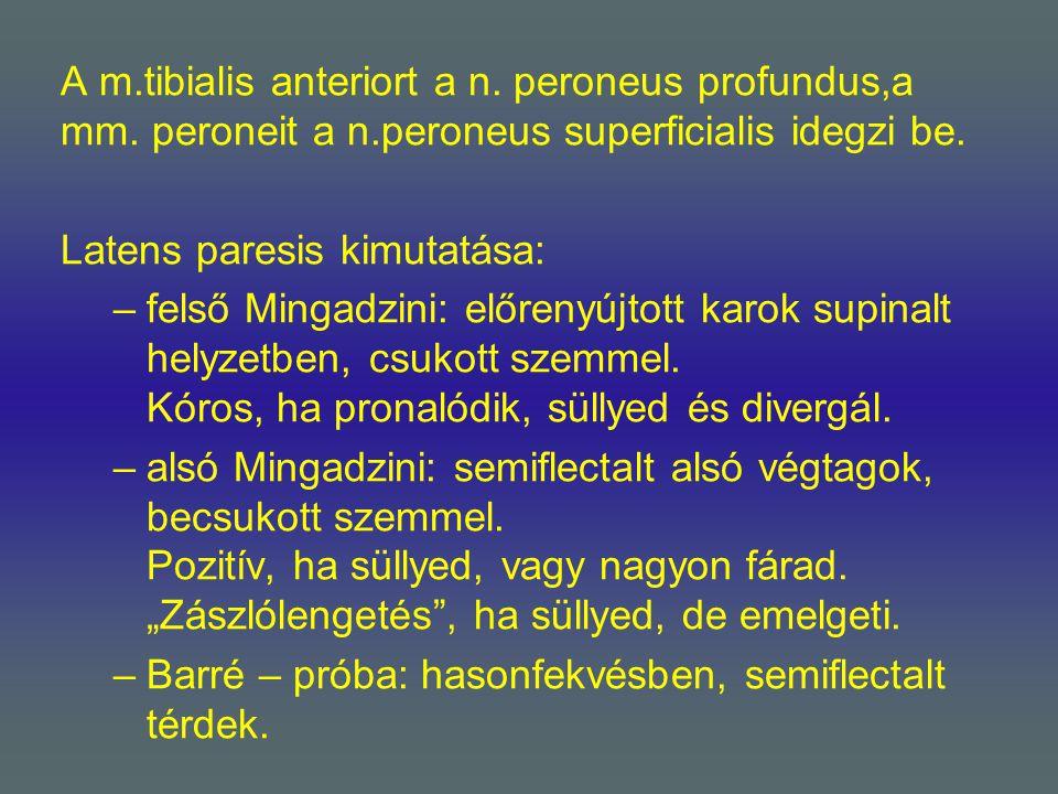 A m. tibialis anteriort a n. peroneus profundus,a mm. peroneit a n