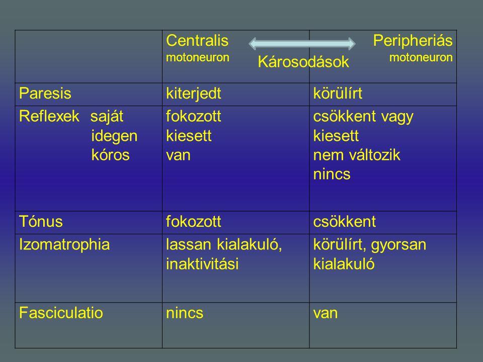 Centralis motoneuron Peripheriás motoneuron. Paresis. kiterjedt. körülírt. Reflexek saját. idegen.