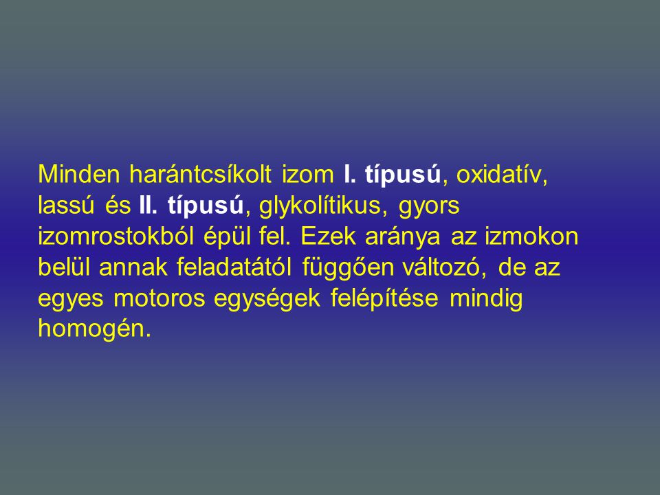 Minden harántcsíkolt izom I. típusú, oxidatív, lassú és II