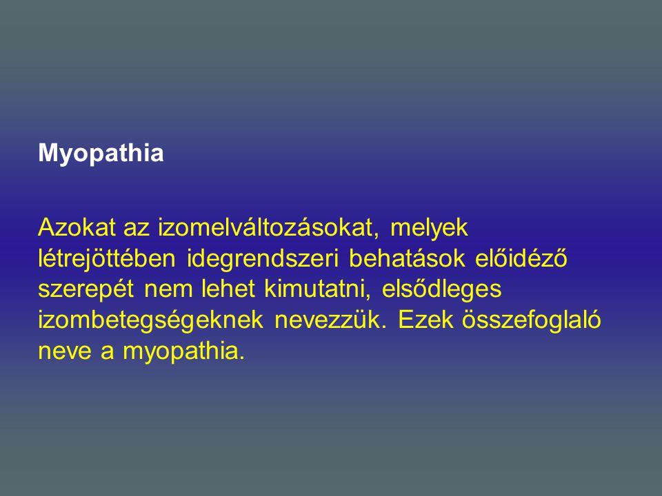 Myopathia Azokat az izomelváltozásokat, melyek létrejöttében idegrendszeri behatások előidéző szerepét nem lehet kimutatni, elsődleges izombetegségeknek nevezzük.