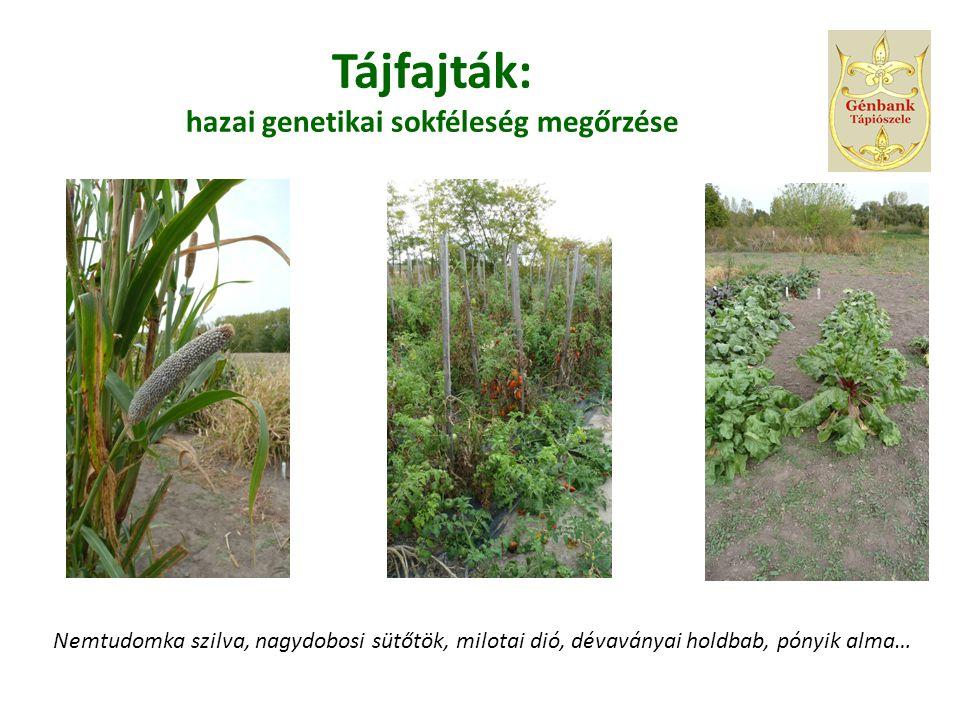 Tájfajták: hazai genetikai sokféleség megőrzése