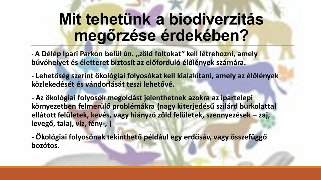 Mit tehetünk a biodiverzitás megőrzése érdekében