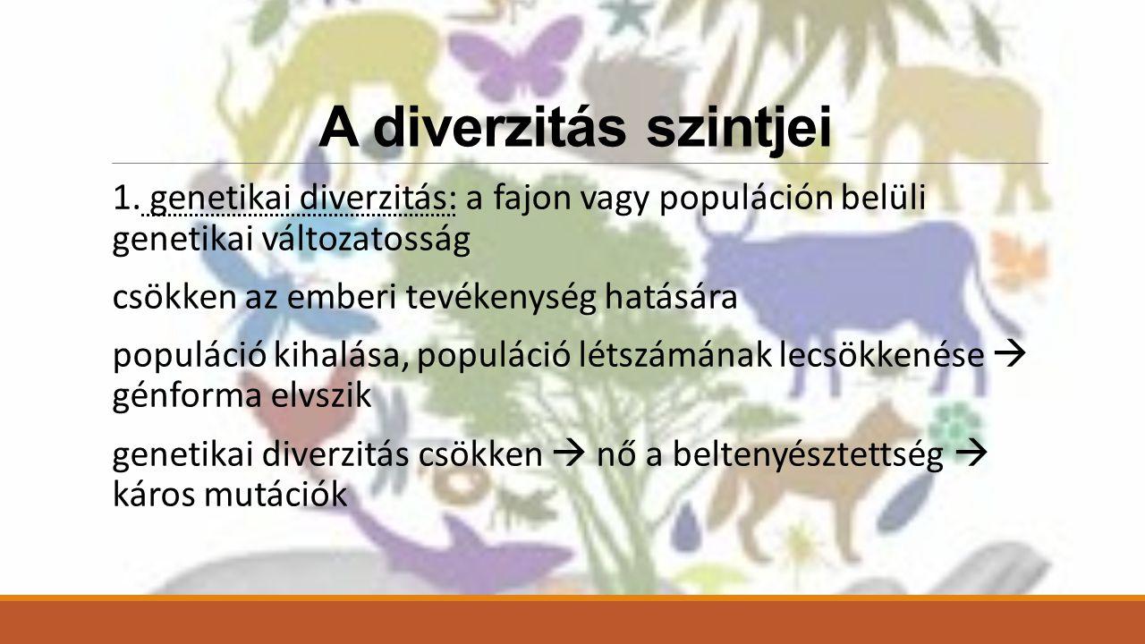 A diverzitás szintjei 1. genetikai diverzitás: a fajon vagy populáción belüli genetikai változatosság.