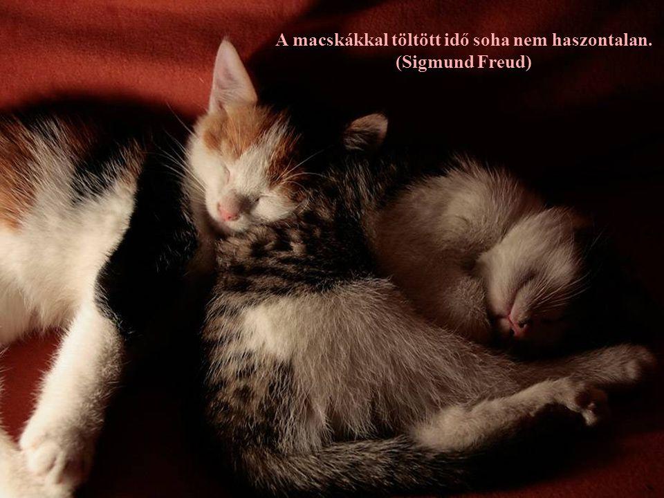 A macskákkal töltött idő soha nem haszontalan.