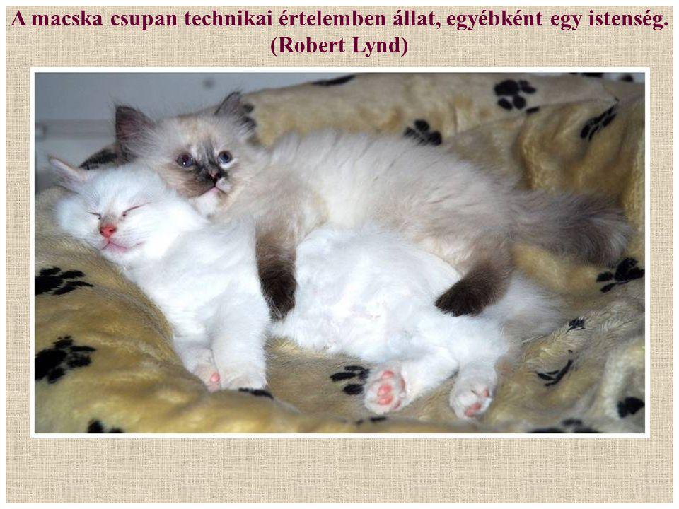 A macska csupan technikai értelemben állat, egyébként egy istenség.
