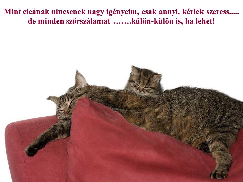 Mint cicának nincsenek nagy igényeim, csak annyi, kérlek szeress