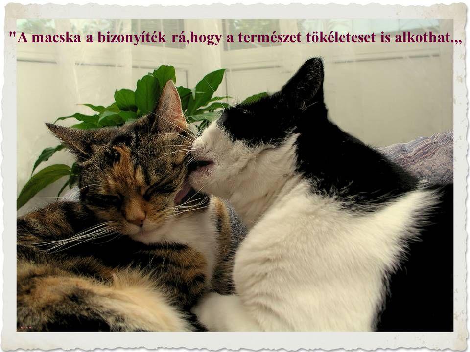 A macska a bizonyíték rá,hogy a természet tökéleteset is alkothat.,,