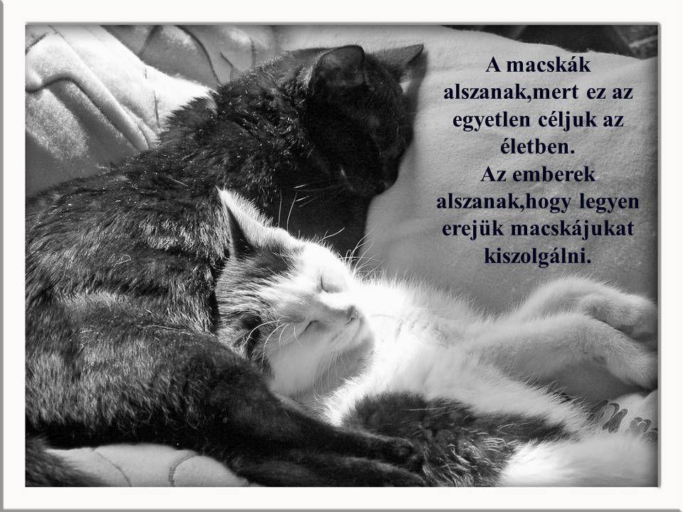 A macskák alszanak,mert ez az egyetlen céljuk az életben