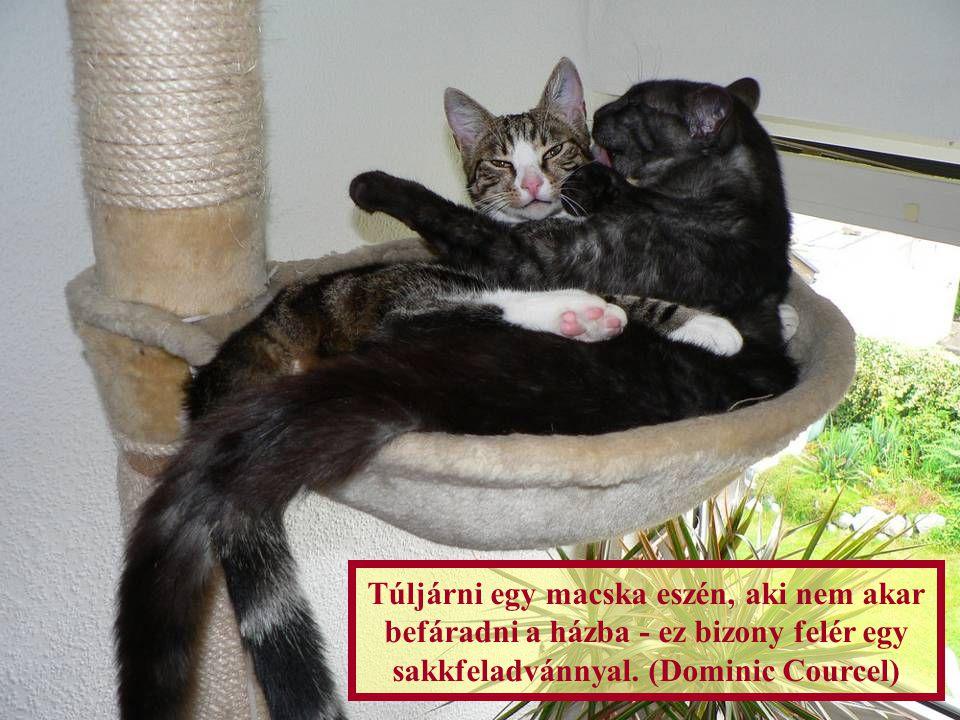 Túljárni egy macska eszén, aki nem akar befáradni a házba - ez bizony felér egy sakkfeladvánnyal.