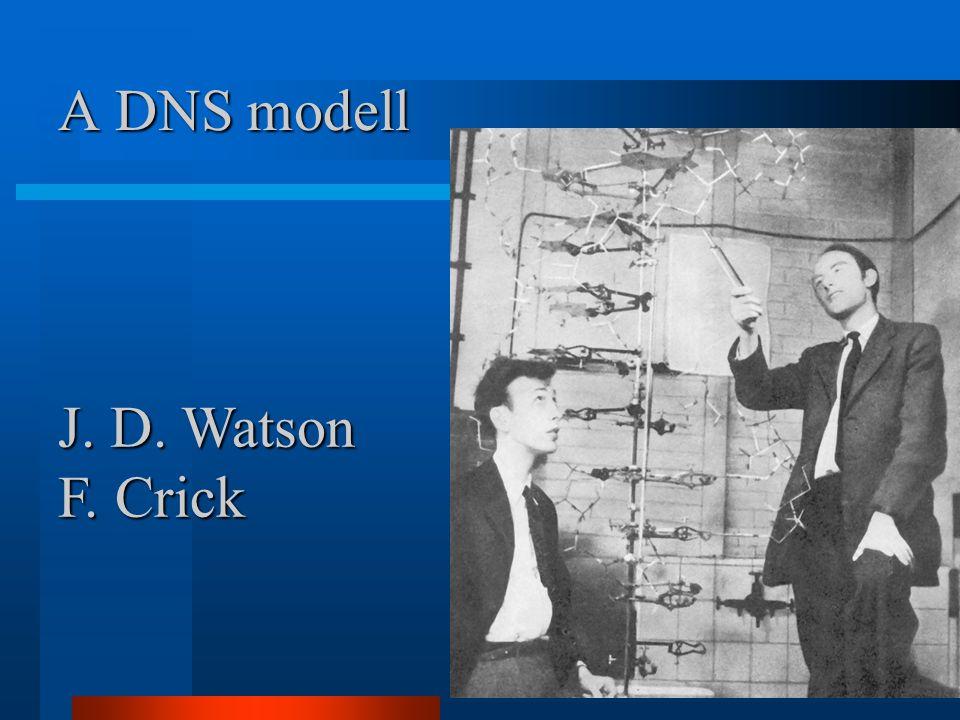 A DNS modell J. D. Watson F. Crick