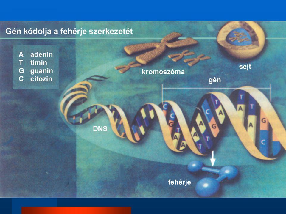 DNS ábra