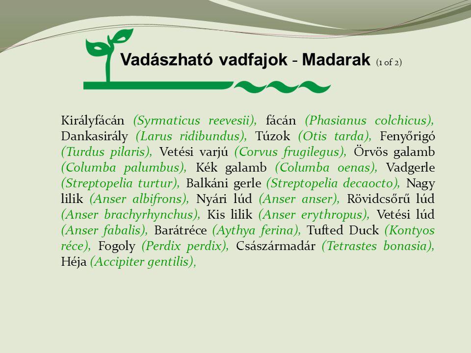 Vadászható vadfajok - Madarak (1 of 2)