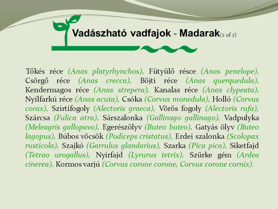 Vadászható vadfajok - Madarak(2 of 2)