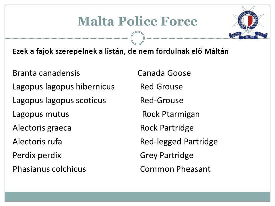Malta Police Force Branta canadensis Canada Goose