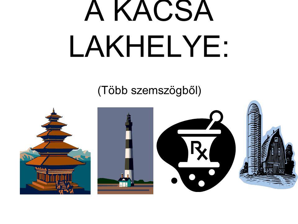 A KACSA LAKHELYE: (Több szemszögből)