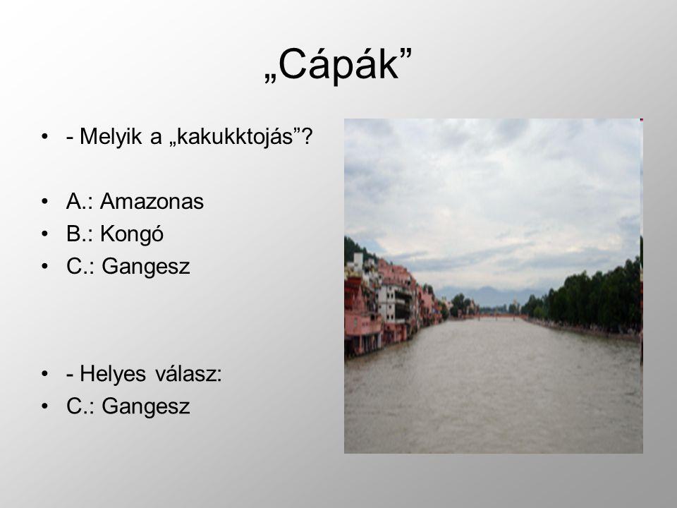 """""""Cápák - Melyik a """"kakukktojás A.: Amazonas B.: Kongó C.: Gangesz"""