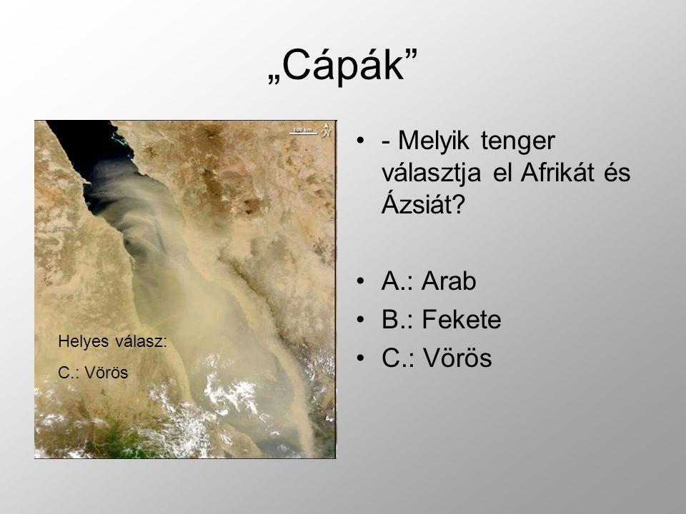 """""""Cápák - Melyik tenger választja el Afrikát és Ázsiát A.: Arab"""