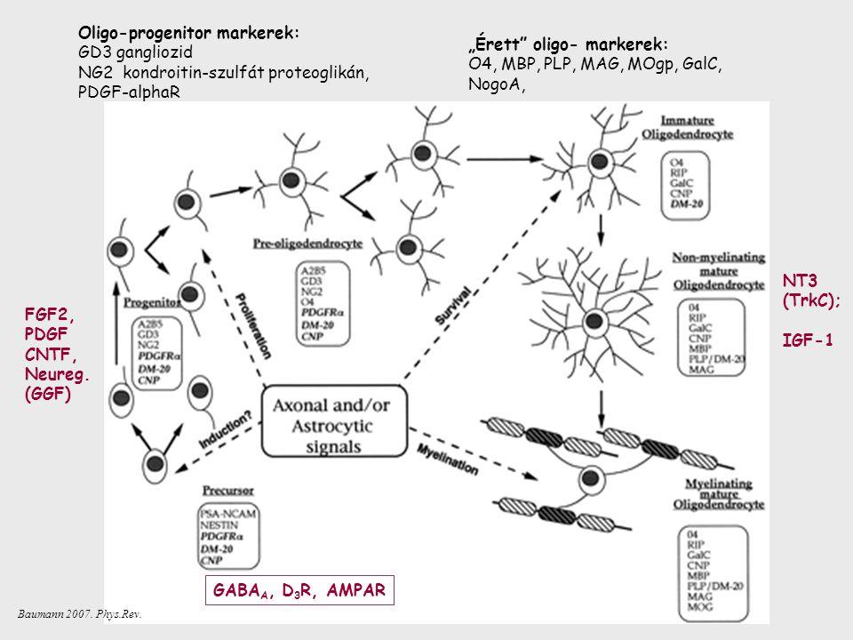 Oligo-progenitor markerek: GD3 gangliozid