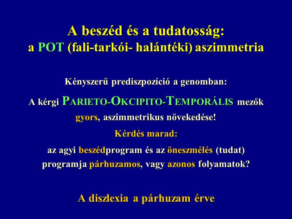 A beszéd és a tudatosság: a POT (fali-tarkói- halántéki) aszimmetria