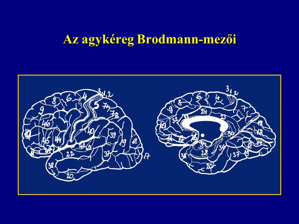 Az agykéreg Brodmann-mezői
