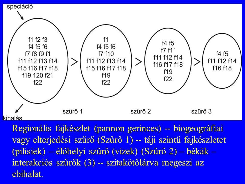 Regionális fajkészlet (pannon gerinces) -- biogeográfiai vagy elterjedési szűrő (Szűrő 1) -- táji szintű fajkészletet (pilisiek) – élőhelyi szűrő (vizek) (Szűrő 2) – békák – interakciós szűrők (3) -- szitakötőlárva megeszi az ebihalat.