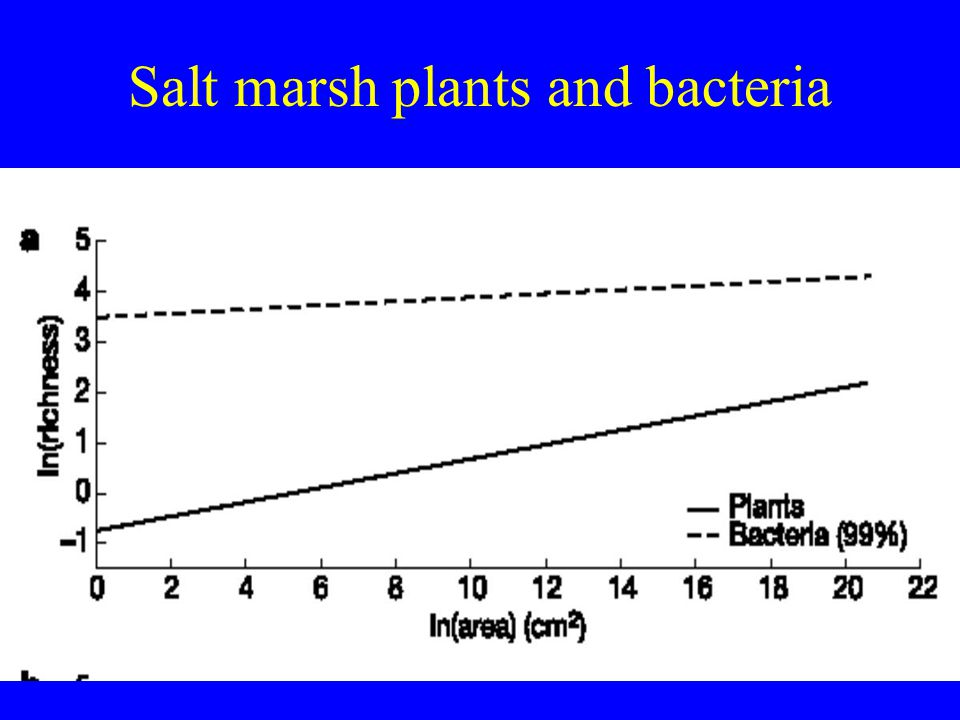 Salt marsh plants and bacteria