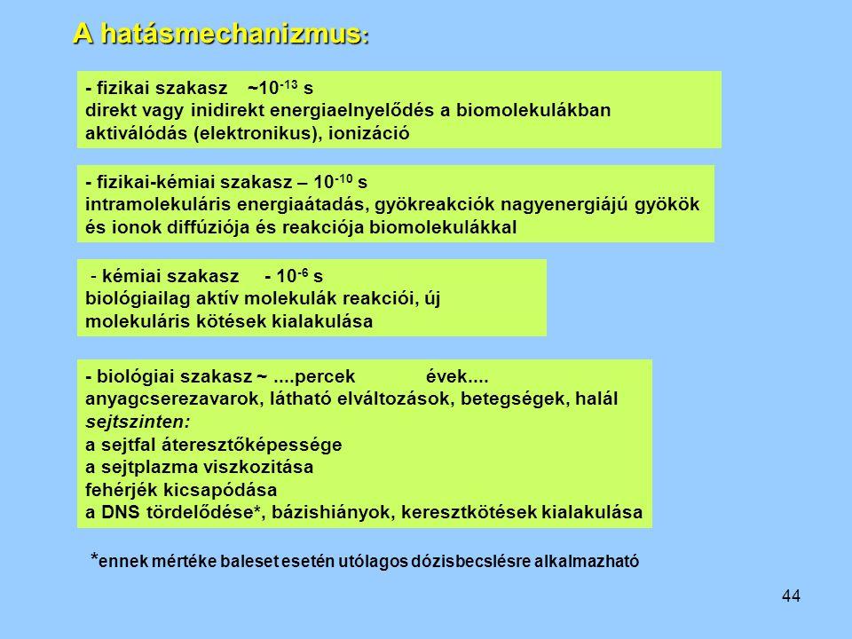 A hatásmechanizmus: - fizikai szakasz ~10-13 s. direkt vagy inidirekt energiaelnyelődés a biomolekulákban.