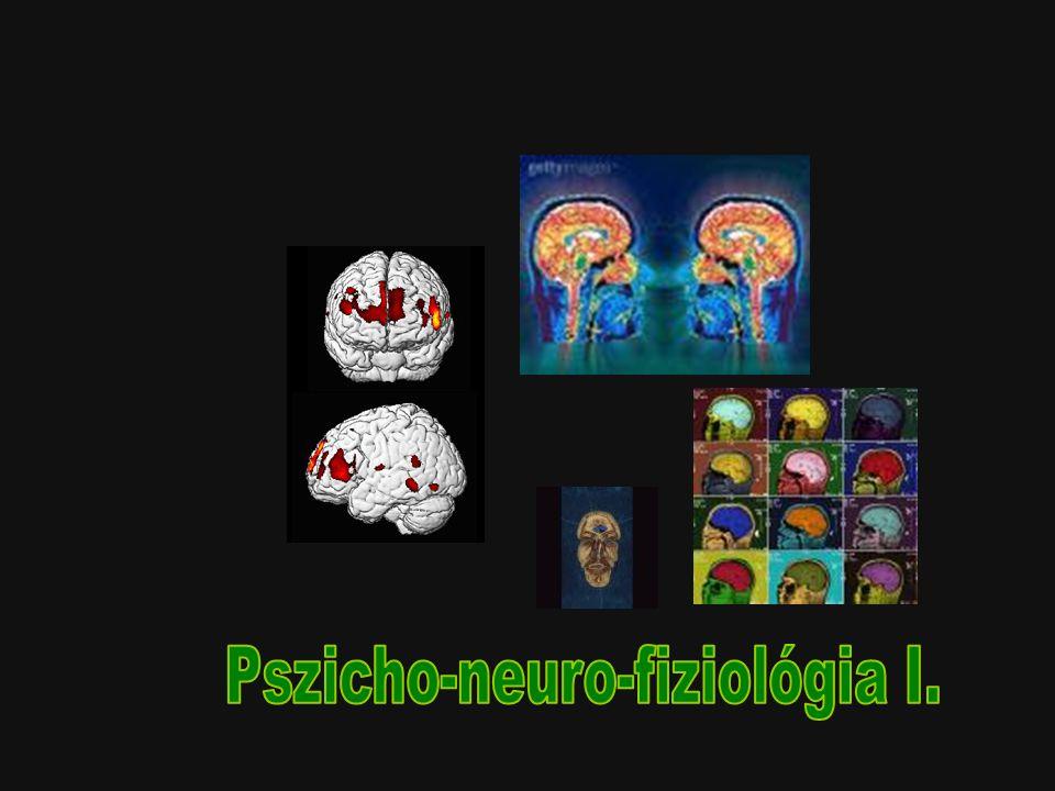 Pszicho-neuro-fiziológia I.