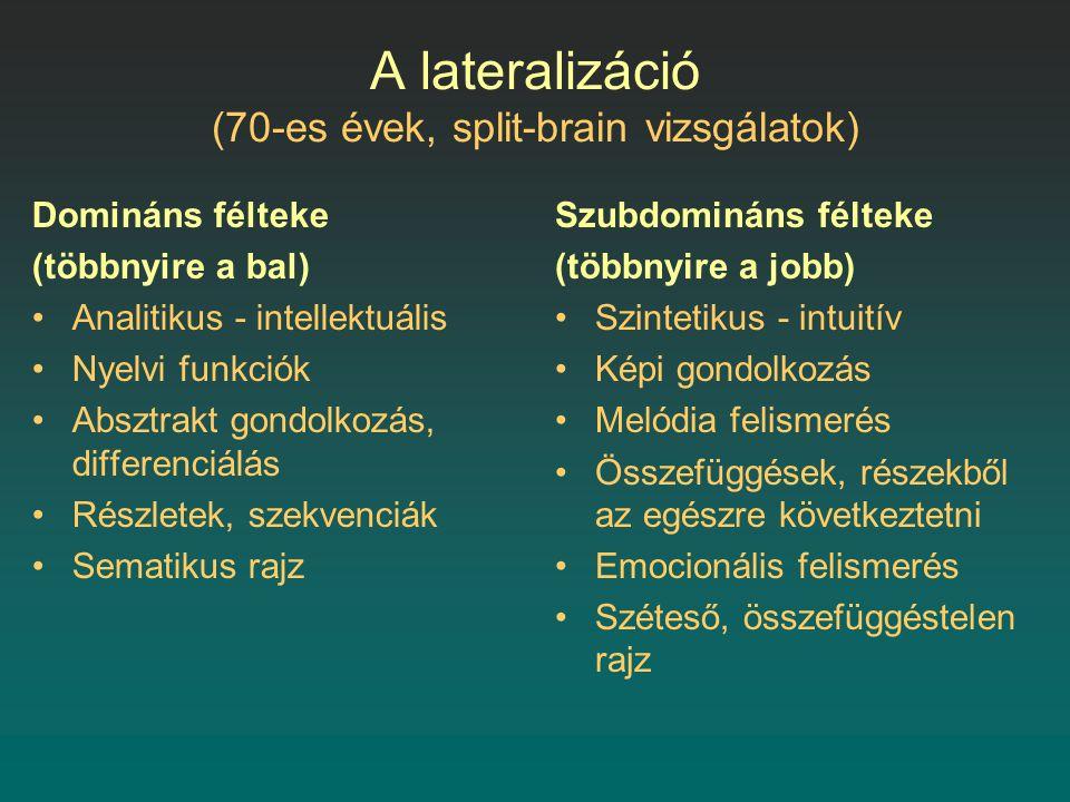 A lateralizáció (70-es évek, split-brain vizsgálatok)
