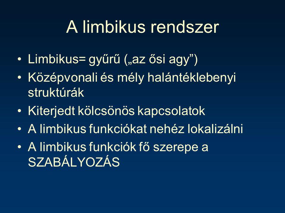 """A limbikus rendszer Limbikus= gyűrű (""""az ősi agy )"""