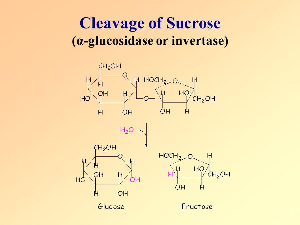 Cleavage of Sucrose (α-glucosidase or invertase)