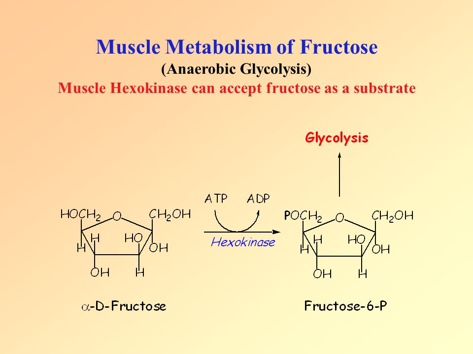 Muscle Metabolism of Fructose (Anaerobic Glycolysis) Muscle Hexokinase can accept fructose as a substrate