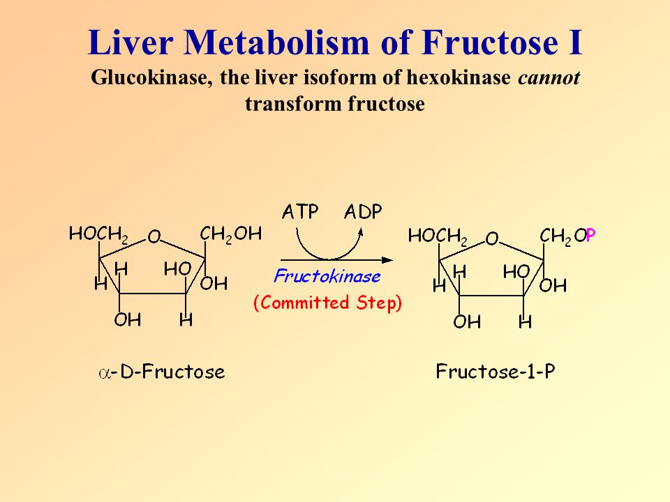 Liver Metabolism of Fructose I Glucokinase, the liver isoform of hexokinase cannot transform fructose