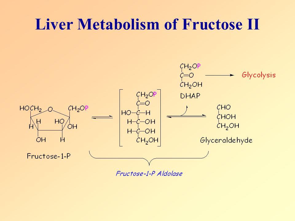 Liver Metabolism of Fructose II