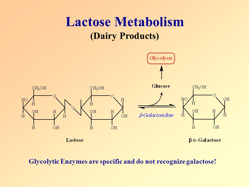 Lactose Metabolism (Dairy Products)