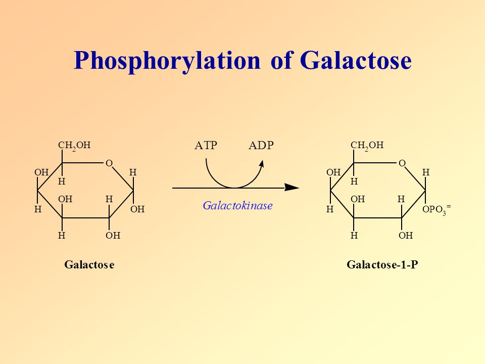 Phosphorylation of Galactose
