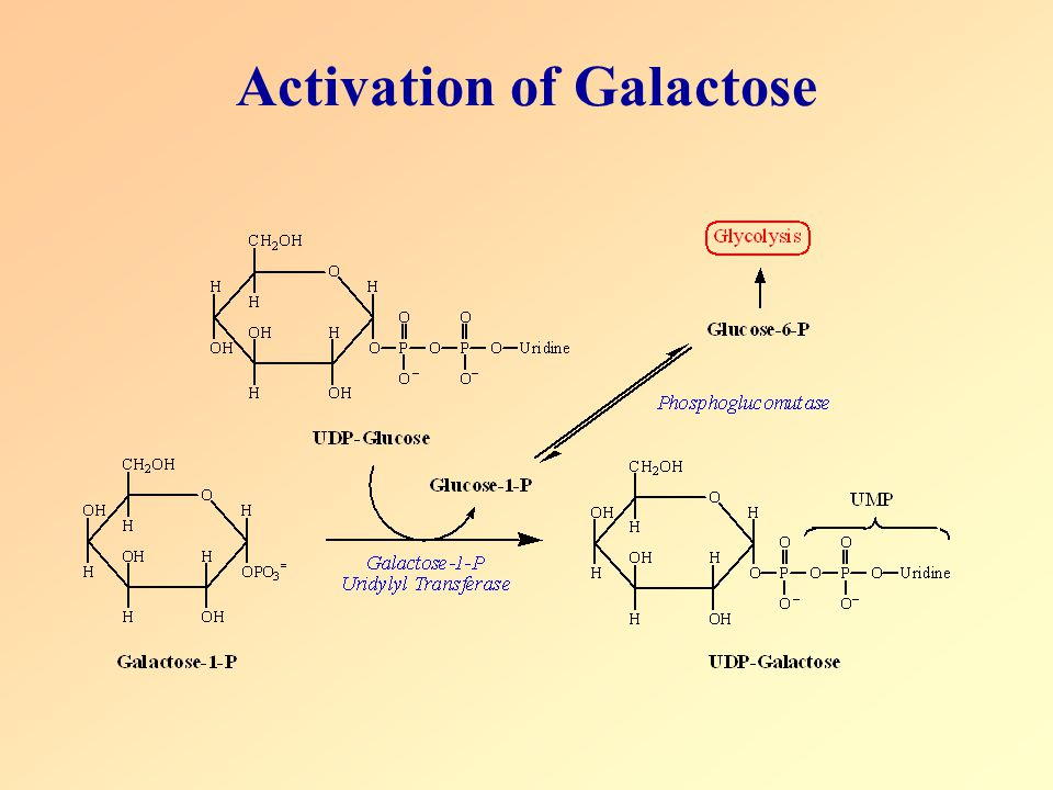 Activation of Galactose