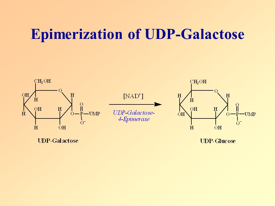Epimerization of UDP-Galactose