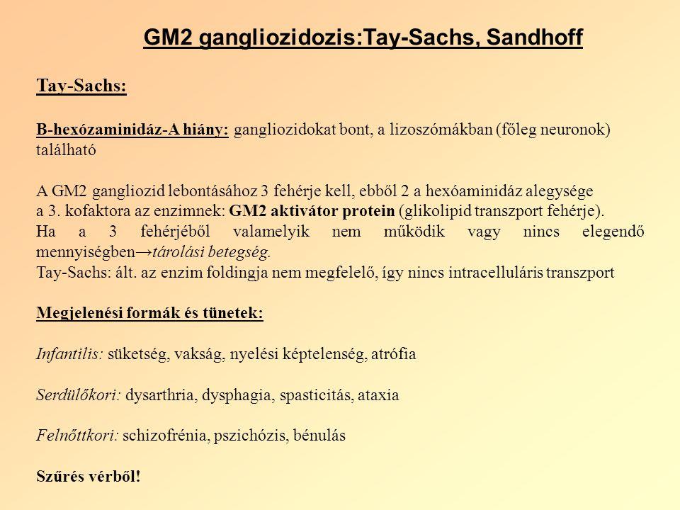 GM2 gangliozidozis:Tay-Sachs, Sandhoff