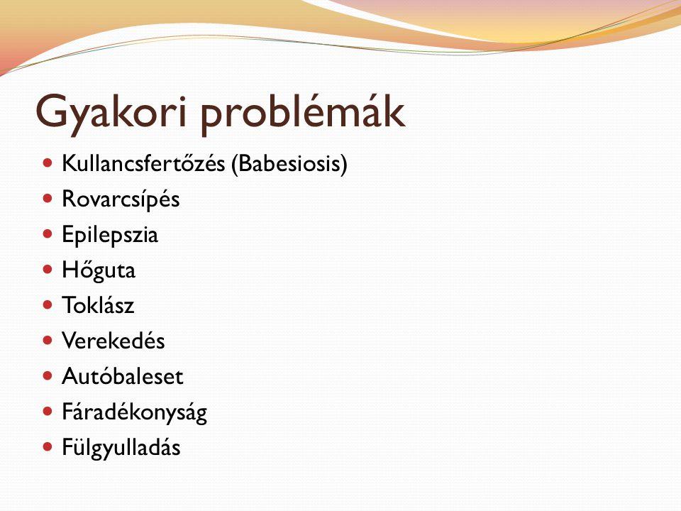 Gyakori problémák Kullancsfertőzés (Babesiosis) Rovarcsípés Epilepszia