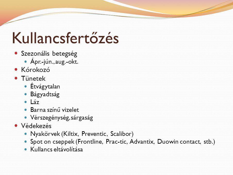 Kullancsfertőzés Szezonális betegség Kórokozó Tünetek Védekezés